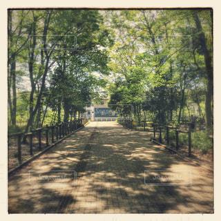 散歩の写真・画像素材[440927]
