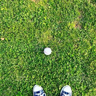 芝生の写真・画像素材[455002]