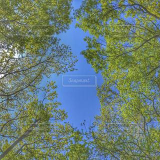 空の写真・画像素材[468593]