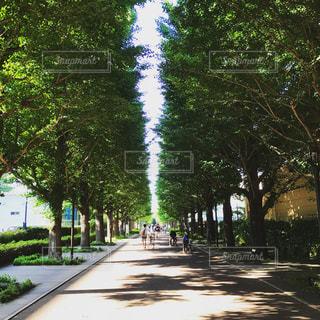 緑の写真・画像素材[520087]