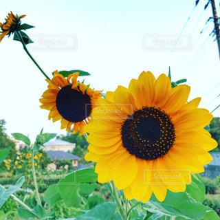 花の写真・画像素材[620405]