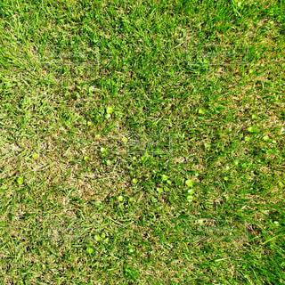 緑の草原の中に漢字が隠れていますの写真・画像素材[744311]