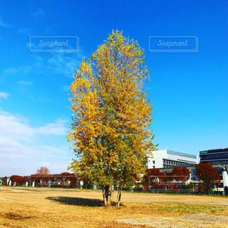 きれいな木です - No.899244