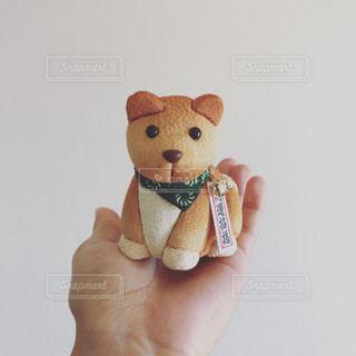 木目込み人形の犬ですの写真・画像素材[935749]