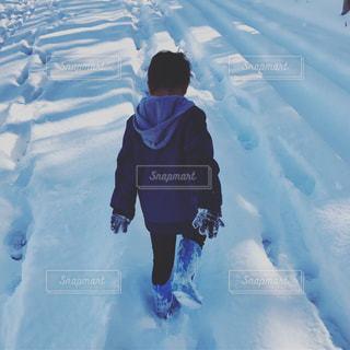 大雪ですの写真・画像素材[973781]