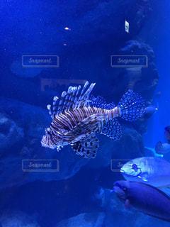 かわいい魚ですの写真・画像素材[1003255]