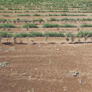 段々畑 - No.1053092