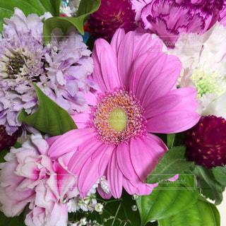 かわいいピンクのお花の写真・画像素材[1143154]