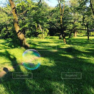 綺麗なシャボン玉の写真・画像素材[1193074]