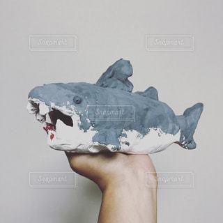 サメさんの写真・画像素材[1394153]