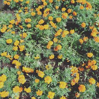 緑とオレンジの写真・画像素材[1446438]