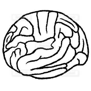 脳みその写真・画像素材[1468342]