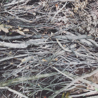枯れ木の写真・画像素材[1479234]