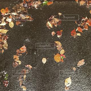 雨と落ち葉の写真・画像素材[1486479]