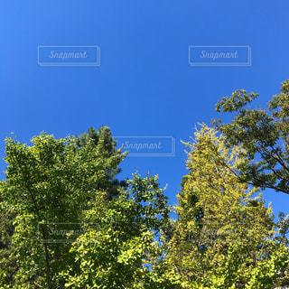 秋空の写真・画像素材[1496399]