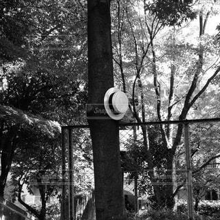 カンカン帽の写真・画像素材[1625180]