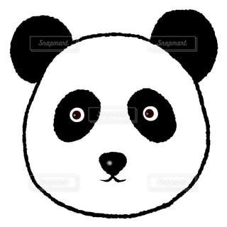 パンダの顔の写真・画像素材[1659221]