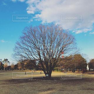 スカスカの木の写真・画像素材[1695531]