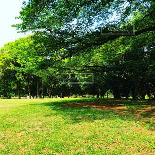 公園の写真・画像素材[2113748]