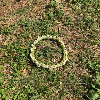 花の王冠の写真・画像素材[2113787]