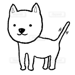 白い犬の写真・画像素材[2202380]