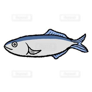 秋刀魚の写真・画像素材[2403840]