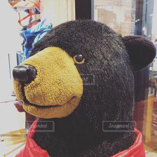 クマさんの写真・画像素材[2800711]