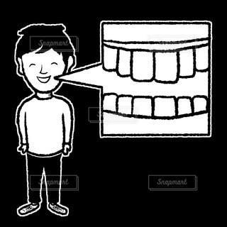 歯の写真・画像素材[3174511]