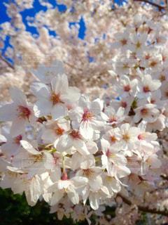 花の写真・画像素材[375974]