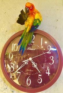 鳥の写真・画像素材[392056]