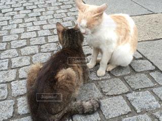 猫の写真・画像素材[377193]