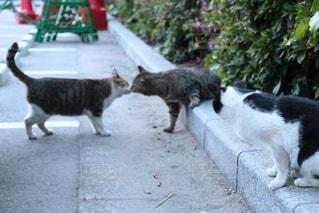 猫の写真・画像素材[374299]