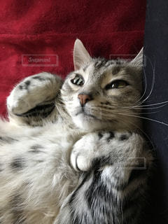 猫 - No.374301