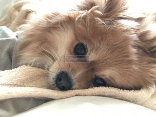 犬 - No.374303