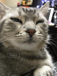 猫 - No.374315