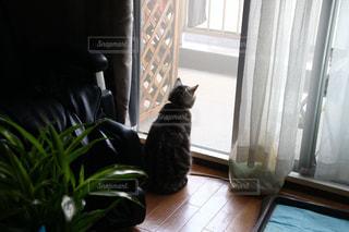 猫の写真・画像素材[374475]