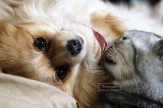 犬の写真・画像素材[374476]
