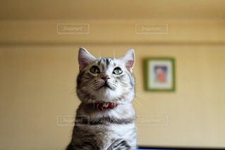 猫 - No.374506