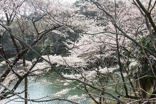 風景 - No.375088