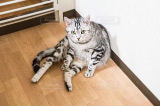 猫の写真・画像素材[375089]