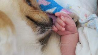 犬の写真・画像素材[375292]