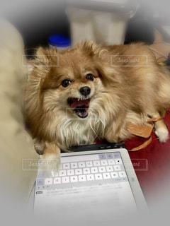犬の写真・画像素材[377414]