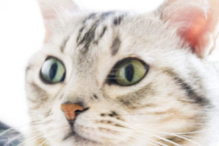 猫 - No.377613