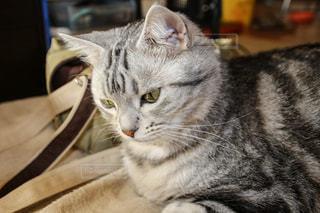 猫の写真・画像素材[379915]