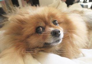 犬の写真・画像素材[380104]