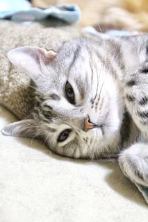 猫 - No.383136