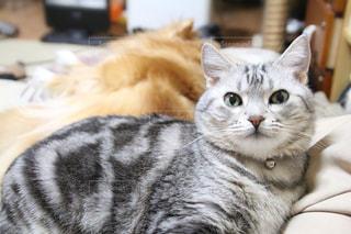 猫の写真・画像素材[385575]