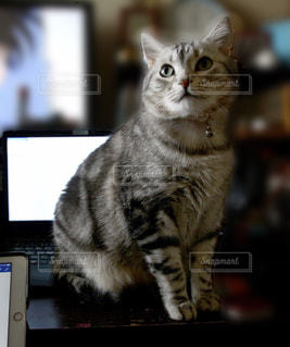 猫の写真・画像素材[392041]