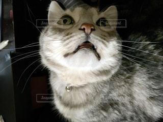 猫の写真・画像素材[397413]