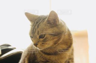 考える猫 - No.1175406